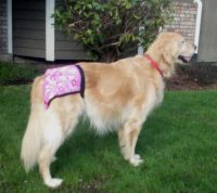 Female Dog Diapers 22